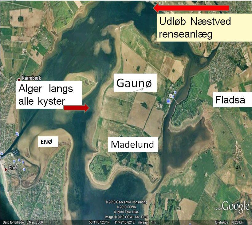 Naestved renseanlaeg fylder fjorden med alger