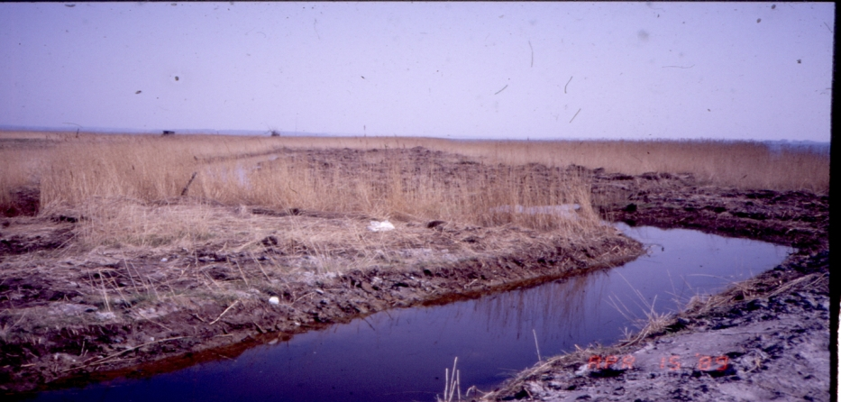 Nyt gravet afløb til tagrørsskoven