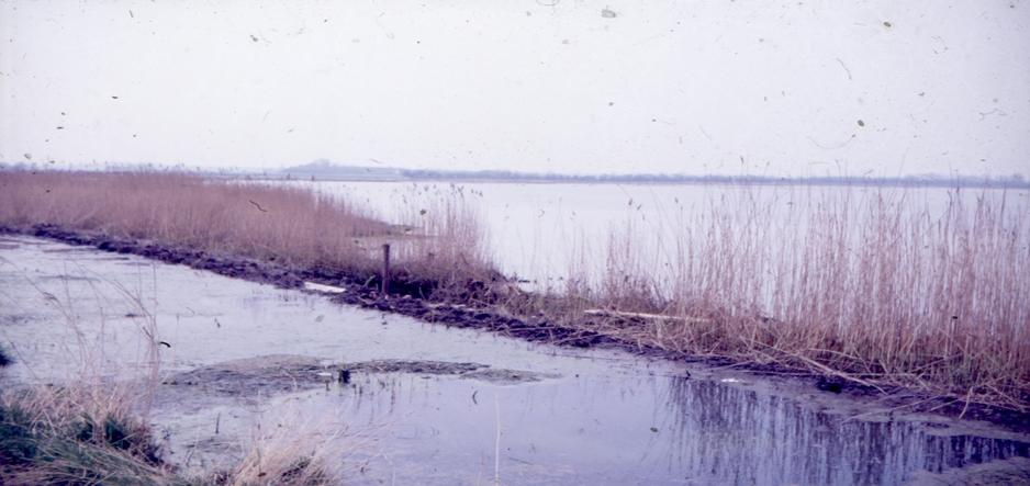 ren fjord udenfor gravet rende